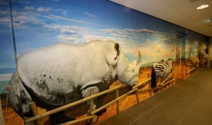 3d muur - wandbekleding - print op wand - muurdecoratie - dementie - zorginstelling - zorgbeleving